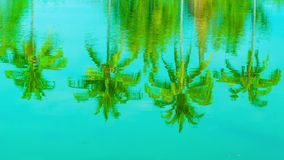 Coconut palms reflection in a pond stock video footage