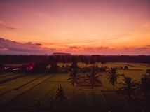 Coconut palms and rice plantation in tropical Bali. Aerial view with sunrise. Coconut palms and rice plantation in tropical Bali. Aerial view royalty free stock photos