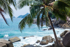 Coconut palms, Rocks and Sea in Phuket Stock Image
