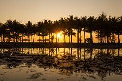 Coconut palms on the sandy beach of the tropical island. Royalty Free Stock Photo