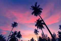 Coconut palms, sharply silhouetted against tropical sunset in Thailand Royalty Free Stock Images