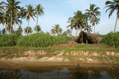 Coconut palms and shelter Stock Photo