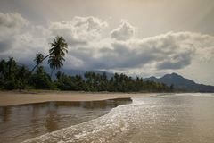 Coconut palms on the shore of the Indian Ocean on a bright day royalty free stock image