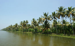 Coconut palms on the shore of the lake Royalty Free Stock Images