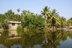 Coconut palms on the shore of the lake. India Stock Images