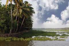 Coconut palms on the shore of the lake. Kerala Royalty Free Stock Image