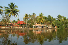 Coconut palms on the shore of the lake. Kerala, South India Stock Photo