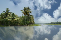 Coconut palms on the shore of the lake. Kerala, South India Royalty Free Stock Photography