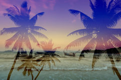 Coconut palms silhouette on sand beach Stock Photography