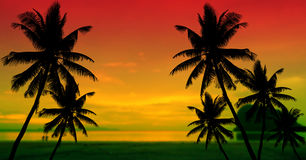 Coconut palms silhouette on sand beach Stock Images