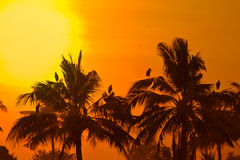 Coconut palms in sunset Stock Images