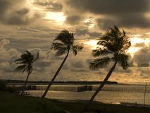 Coconut palms in the sunset. In Salinopolis - North of Brazil Royalty Free Stock Photo