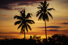 Coconut palms sunset Mindanao Philippines. Coconut palms against sunset Mindanao Philippines Stock Photos