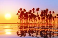 Coconut island Stock Photography