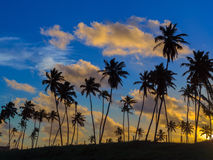 Coconut palms in the sunset Stock Images