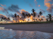 Coconut palms in the sunset stock photos