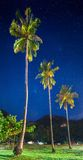 Coconut palms. Thailand Stock Image