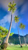 Coconut palms. Thailand Royalty Free Stock Image