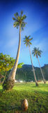 Coconut palms. Thailand Royalty Free Stock Photography