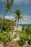Coconut palms in Thailand Stock Photos