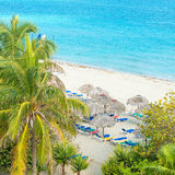 Coconut palms and thatched umbrellas in a cuban beach. Coconut palms and thatched umbrellas at the beautiful Varadero beach in Cuba Stock Images