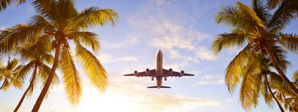 Free Coconut Palms Tree And Airplane At Sunset. Passenger Plane Above Tropical Island. Stock Photos - 163090453