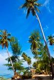 Coconut palms on tropic coast stock photo