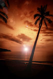 Coconut palms is in tropic on sunset. Stock Photo