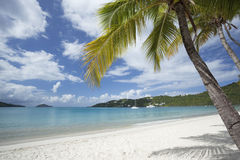 Coconut palms at a tropical beach Royalty Free Stock Image