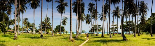 Coconut Palms on Tropical Island Stock Images