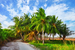 Coconut palms on a tropical island in the Maldives Royalty Free Stock Photos