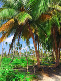 Coconut palms on a tropical island in the Maldives Royalty Free Stock Photography