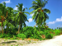 Coconut palms on a tropical island in the Maldives Stock Photo