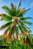 Coconut palms on a tropical island in the Maldives Royalty Free Stock Images