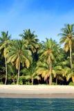 Coconut palms tropical paradise Royalty Free Stock Photos