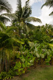 Coconut palms and  tropical vegetation. Stock Photo