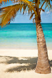 Coconut palms under blue Caribbean sky Stock Image