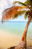 Coconut palms under blue Caribbean sky Royalty Free Stock Image