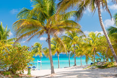 Coconut palms and white sandy beach in Cuba Royalty Free Stock Photography