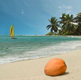 Coconut on paradise beach. Coconut is on the sand of tropical paradise beach. Sky and beach area is free for your text Royalty Free Stock Images