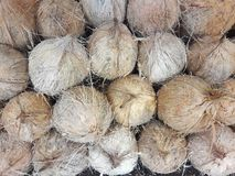 Coconuts collected in a shop. royalty free stock image