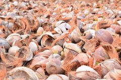 Coconut peel. In Thailand Stock Image