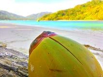 Coconut. Personal Documentation. Location : Pulau Kelapa Teluk Kiluan Stock Photos