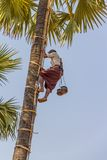 Coconut picker Royalty Free Stock Images