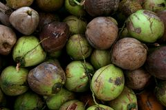 Coconut Pile Stock Image