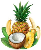 Coconut,  pineapple and bananas Stock Images