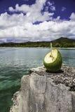Coconut_Pines海岛 免版税库存照片