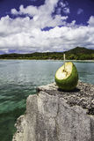 Coconut_Pines Island Royalty Free Stock Photo