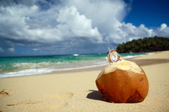 Coconut with pipe on beach of ocean Royalty Free Stock Images