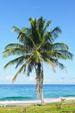 Coconut plam and beach Royalty Free Stock Images
